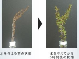 イプセルダブルステムセラム復活の木の保湿成分配合