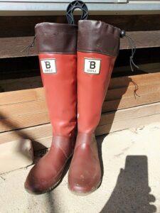 日本野鳥の会長靴自立